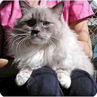 Adopt A Pet :: Jack - El Cajon, CA
