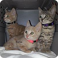 Adopt A Pet :: Dallas - Portland, OR