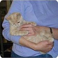 Adopt A Pet :: Kody Kadillac - McDonough, GA