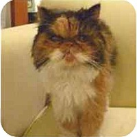 Adopt A Pet :: Gidgie - Beverly Hills, CA