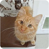Adopt A Pet :: Christopher - Phoenix, AZ