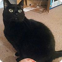 Adopt A Pet :: Stroodles - Nolensville, TN
