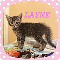 Adopt A Pet :: Layne - Tampa, FL