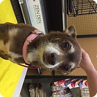Adopt A Pet :: Chester - Richmond, VA