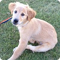 Adopt A Pet :: Isadora - BIRMINGHAM, AL
