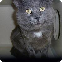 Adopt A Pet :: Rusty - Hamburg, NY