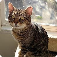 Adopt A Pet :: Kingsley - Atlanta, GA