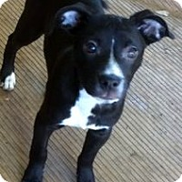 Adopt A Pet :: ARIEL - Rossford, OH