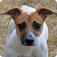 Adopt A Pet :: Milo - Englewood, FL