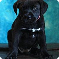 Adopt A Pet :: Tia - Waldorf, MD