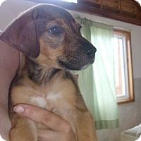 Adopt A Pet :: Heidi - oxford, NJ
