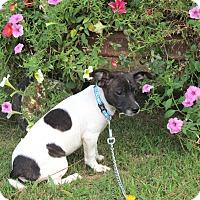 Adopt A Pet :: RUBIX - Bedminster, NJ