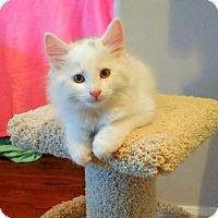 Adopt A Pet :: Navajo - Richmond Hill, ON