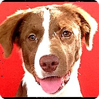 Adopt A Pet :: Cutty - Johnson City, TX