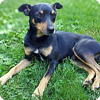 Adopt A Pet :: Maverick - Lisbon, IA