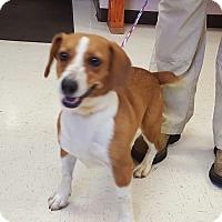 Adopt A Pet :: Rosebud - Trenton, NJ