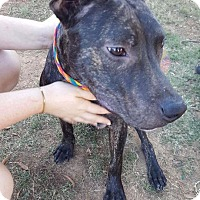 Adopt A Pet :: Scooter - Uxbridge, MA