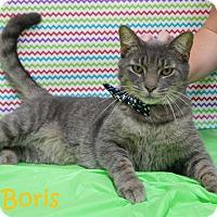 Adopt A Pet :: Boris - Bucyrus, OH