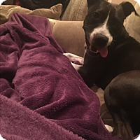 Adopt A Pet :: Cody (COURTESY POST) - Baltimore, MD
