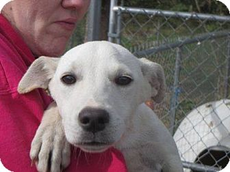 Terrier (Unknown Type, Small) Mix Dog for adoption in Wilkes Barre, Pennsylvania - Ivory