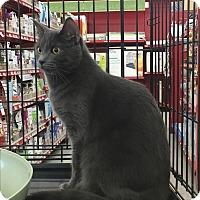 Adopt A Pet :: Walton - Sterling Hgts, MI