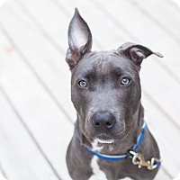 Adopt A Pet :: Griffin - Dayton, OH