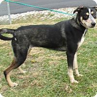Adopt A Pet :: Crystal - Reeds Spring, MO