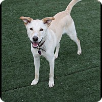 Adopt A Pet :: Marne - Rockwall, TX