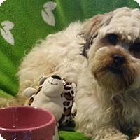 Adopt A Pet :: Marco - Vacaville, CA