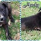 Adopt A Pet :: Andy
