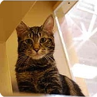 Adopt A Pet :: Bosco - Modesto, CA