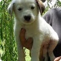 Adopt A Pet :: Buckaroo - Staunton, VA
