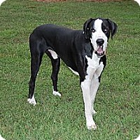 Adopt A Pet :: Petey - Virginia Beach, VA