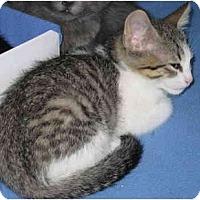 Adopt A Pet :: Taenia - Davis, CA