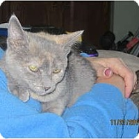 Adopt A Pet :: Sonja - Sterling Hgts, MI