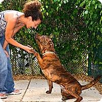 Adopt A Pet :: Rico - Ft. Lauderdale, FL
