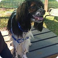 Adopt A Pet :: SIR ELTON - Boca Raton, FL