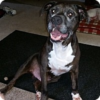 Adopt A Pet :: JAKE- NEEDS FOSTER!!! - Birmingham, MI