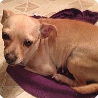 Adopt A Pet :: Rosie - Gilbert, AZ
