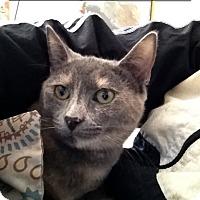 Adopt A Pet :: Emily - Fairfax, VA