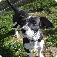 Adopt A Pet :: Rupert - Meridian, ID