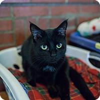 Adopt A Pet :: Colt - Statesville, NC