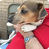 Adopt A Pet :: Terri - Greensboro, GA
