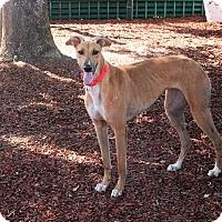Adopt A Pet :: Makala - Santa Rosa, CA