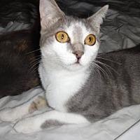 Adopt A Pet :: MANDY - Lawton, OK