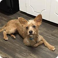 Adopt A Pet :: McGruff - Houston, TX