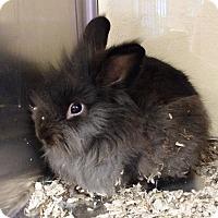Adopt A Pet :: Ronnie - Lake Elsinore, CA