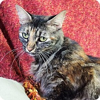 Domestic Mediumhair Cat for adoption in Prattville, Alabama - Lizzie 25713