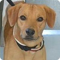 Adopt A Pet :: Jack - Sharon, CT