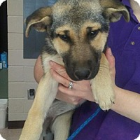 Adopt A Pet :: Lesley (Adoption Pending) - Morrisville, NC